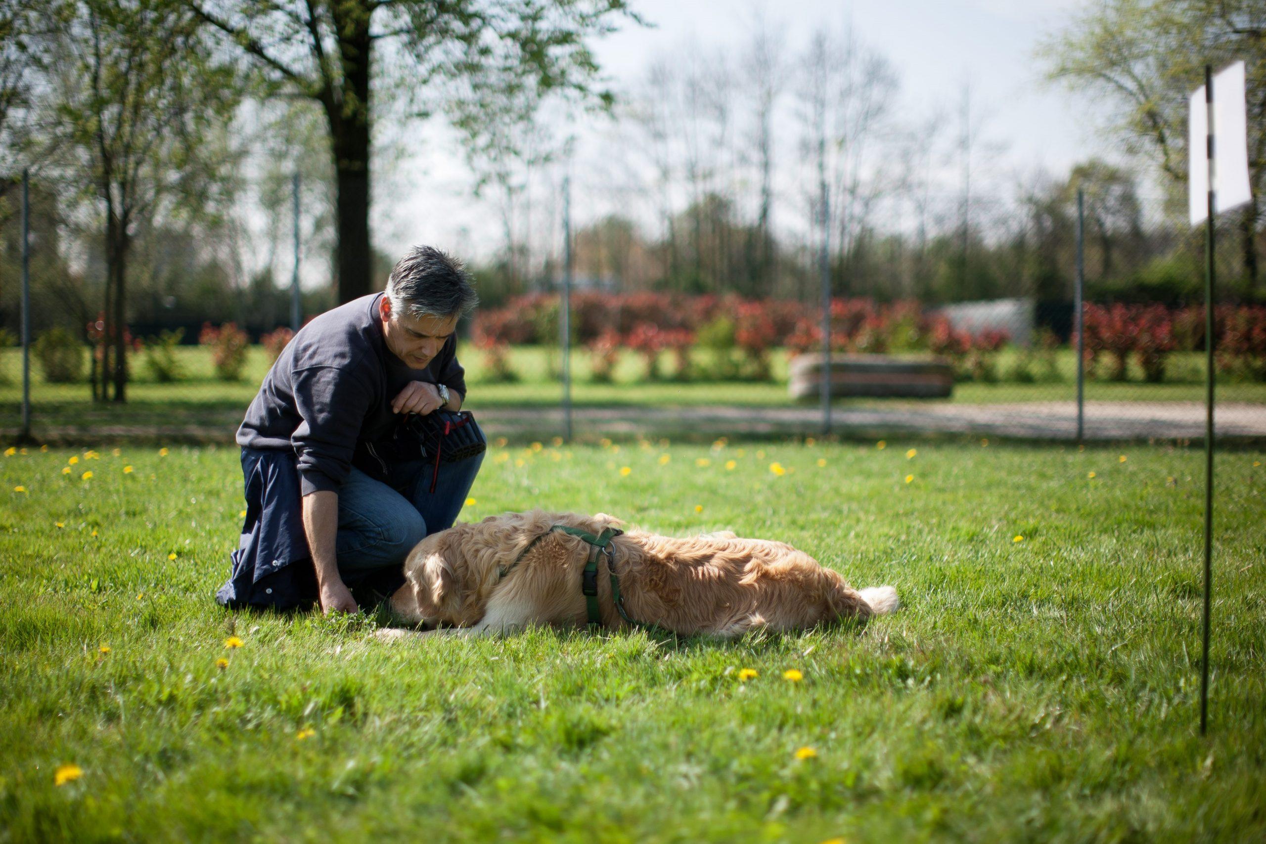 Corsi di apprendimento cani Venezia Mestre