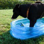 attivazione mentale: Laboratorio di attivazione mentale per cani