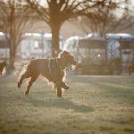Asilo per cani Venezia Mestre - ludoteca per cani