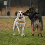 Corsi socializzazione cani Venezia, Cani per caso