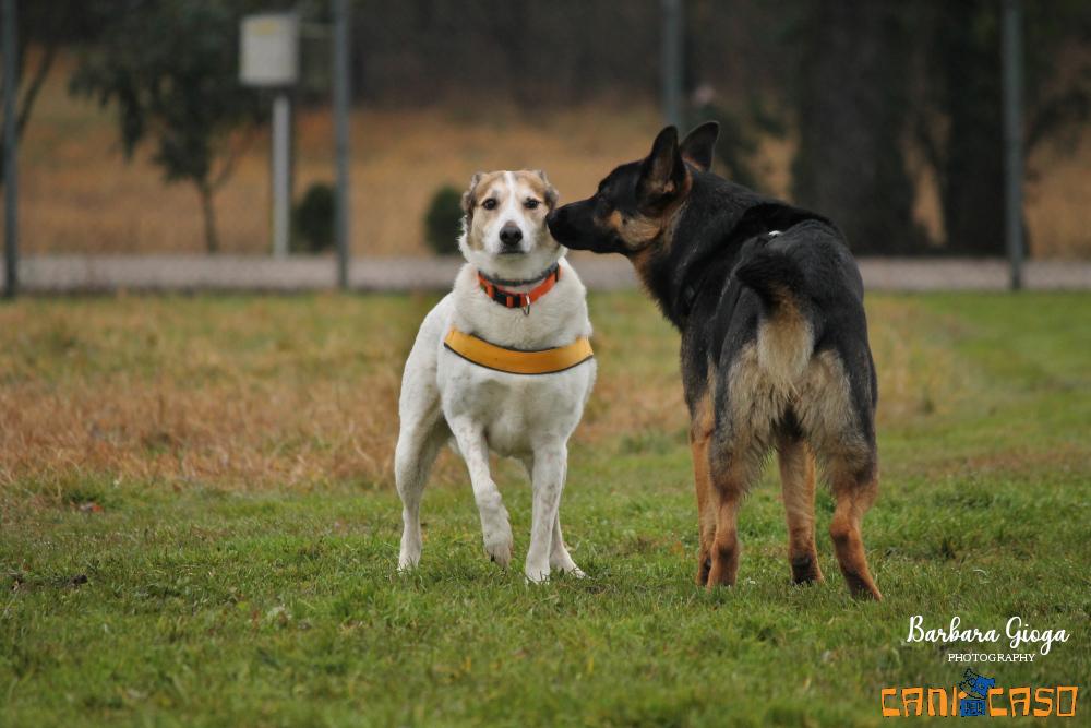 Classi di socializzazione cani Venezia Mestre