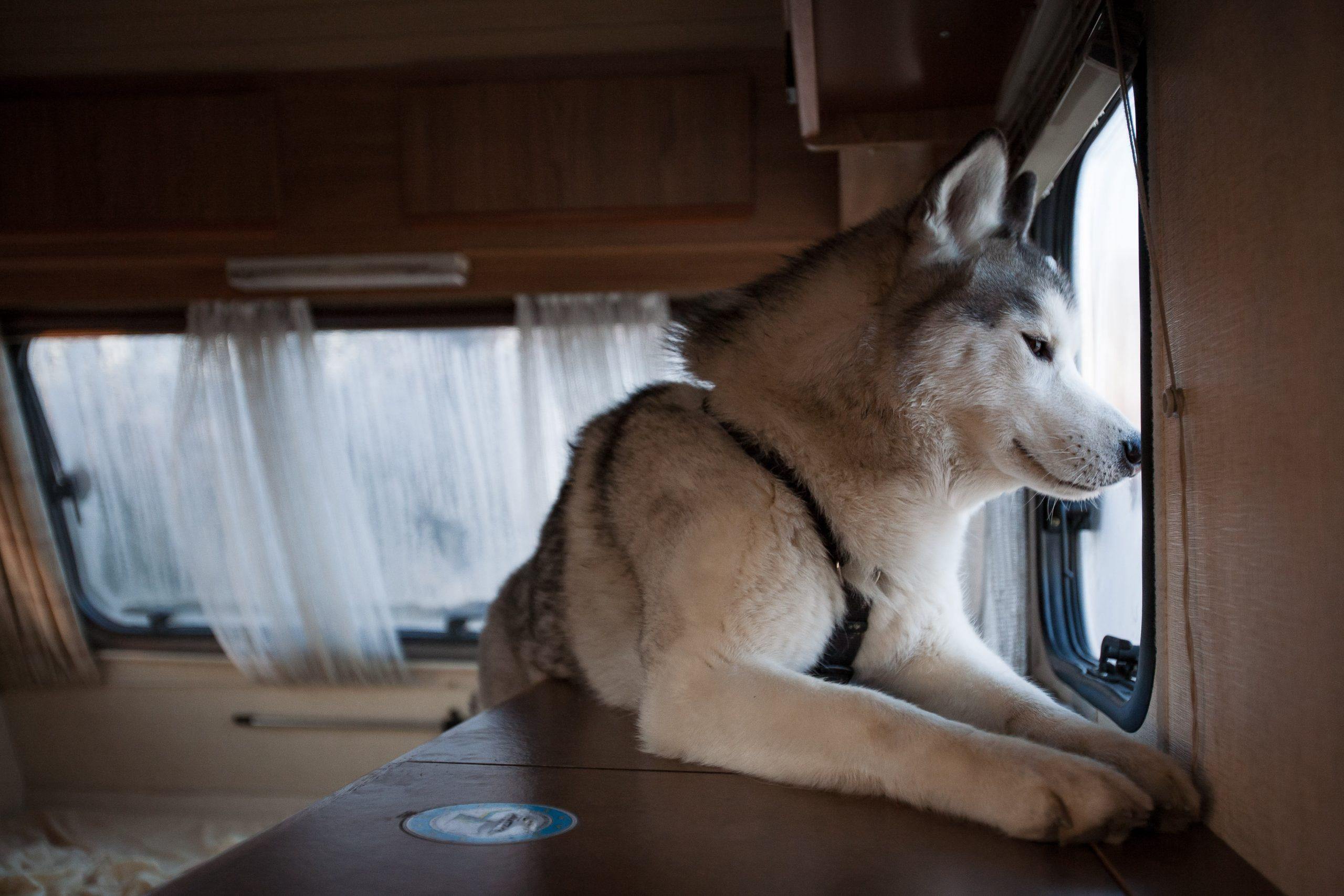 Asilo per cani a Venezia Mestre