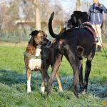 ???? Corsi socializzazione cani Venezia, Cani per caso