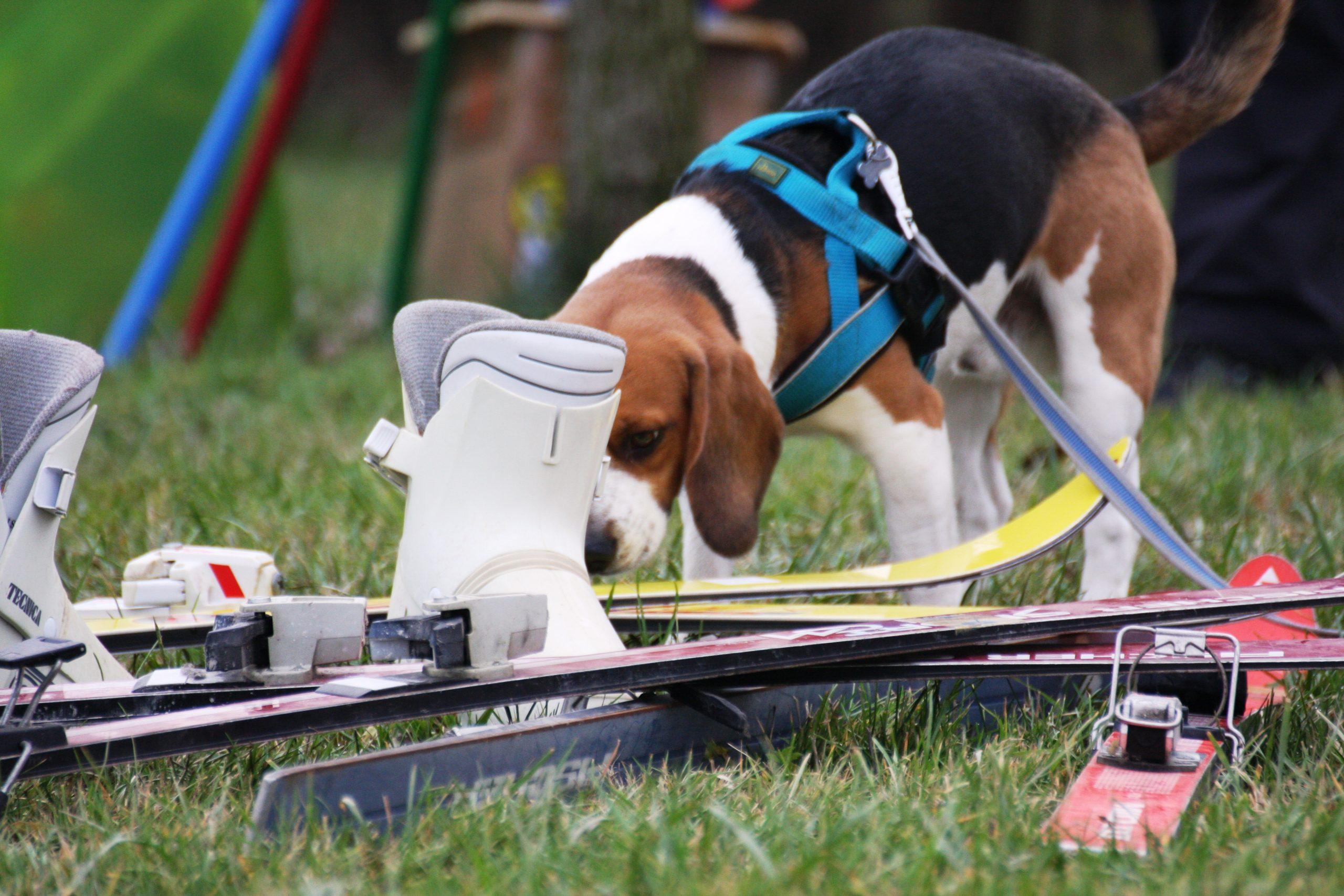 Fiuto cani: addestramento fiuto Venezia Mestre