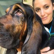 Lisa Vezzola cani per caso Venezia Mestre